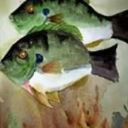 Two Bluegills Art Print