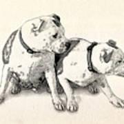 Two Bull Terriers Art Print by Michael Tompsett
