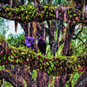 Two Buzzards In A Tree Art Print