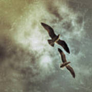 Two By Two They Flew Art Print