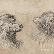 Two Camel Heads [recto] Art Print