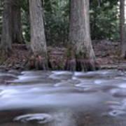 Two Ceders Next To A Mountain Stream Art Print