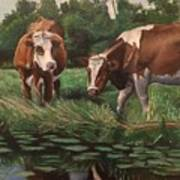 Two Cows By A Pond Art Print