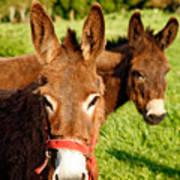 Two Donkeys Art Print