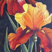 Two Fiery Iris Art Print