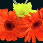Two Gerbers And Daffodil Art Print