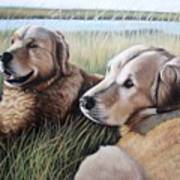 Two Golden Retriever Art Print