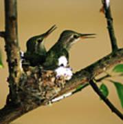 Two Hummingbird Babies In A Nest 5 Art Print