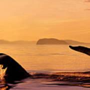 Two Humpback Whales Art Print