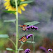 Two Monarch Butterflies And Sunflower 2011 Art Print