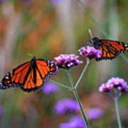 Two Monarchs Sharing 2011 Art Print