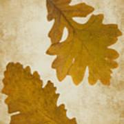Two Oak Leaves  Art Print