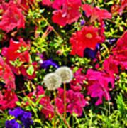 Two Of Dandelion. Floral Carpet. Art Print