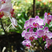 Two Orchid Branches Number One Art Print