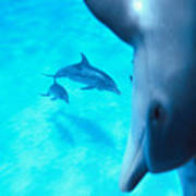 Two Pairs Of Dolphins Art Print
