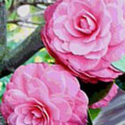 Two Pink Camellias - Digital Art Art Print