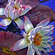 Two Pink Water Lilies Art Print