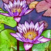 Two Purple Lotus Flower Art Print