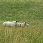 Two Rhino In The Grass Art Print
