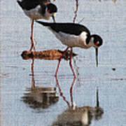 Two Stilts Walk The Pond Art Print