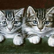 Two Tabby Kittens  Art Print