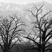 Two Trees Flatirons Boulder Colorado Art Print