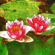 Two Waterlily Flower Art Print