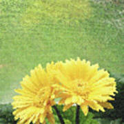 Two Yellow Gerber Daisies Art Print