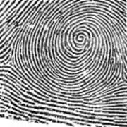 Typical Whorl Pattern In 1900 Art Print