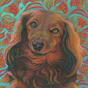 Long-haired Dachshund Art Print