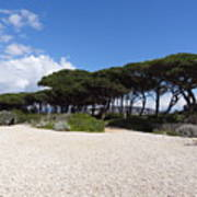 Umbrella Pine, Lerins Island Art Print