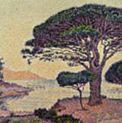 Umbrella Pines At Caroubiers Art Print by Paul Signac