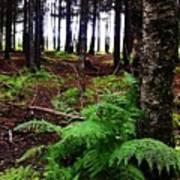 Under The Alaskan Trees Art Print