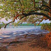Under The Mangroves Art Print