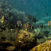 Under The Sea Scape Art Print