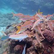 Under Water Fiji Art Print