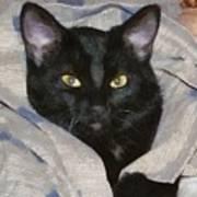 Undercover Kitten Art Print