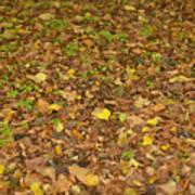 Undergrowth, Leaves Carpet. Art Print