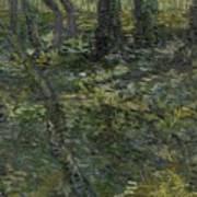Undergrowth Saint Remy De Provence  July 1889 Vincent Van Gogh 1853  1890 Art Print