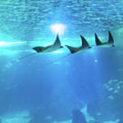 Underwater Manta Background Art Print