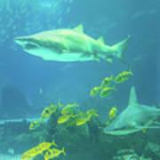 Underwater Shark Background Art Print