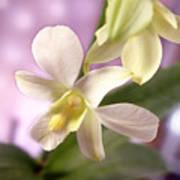 Unique White Orchid Print by Mike McGlothlen