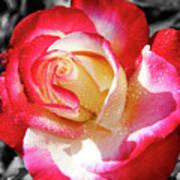 Unity Rose Art Print