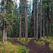 University Of Alaska Fairbanks Trail System Art Print