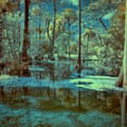 Unseen Wetland Art Print