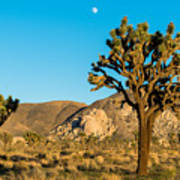 Untouched Joshua Tree National Park Art Print