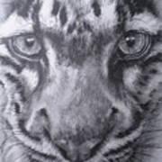Up Close Clouded Leopard Art Print