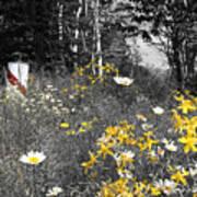 UP Wildflowers II Art Print