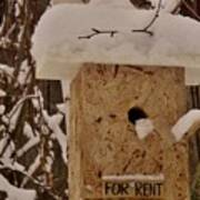 Upscale Bird Loft For Rent Art Print