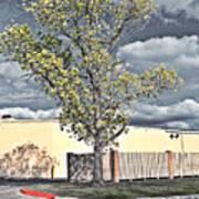 Urban Cottonwood Art Print